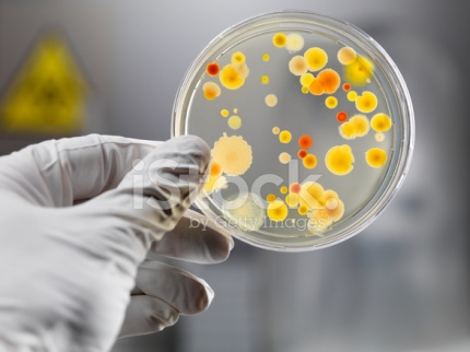 8256266-gloved-hand-holding-petri-dish-with-bacteria-culture